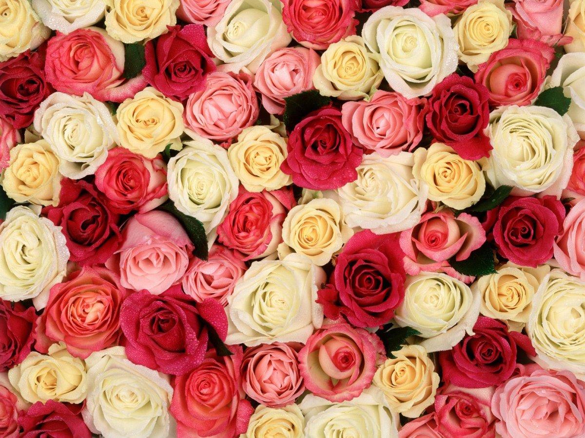 Найкраще підійдуть тюльпани ці квіти
