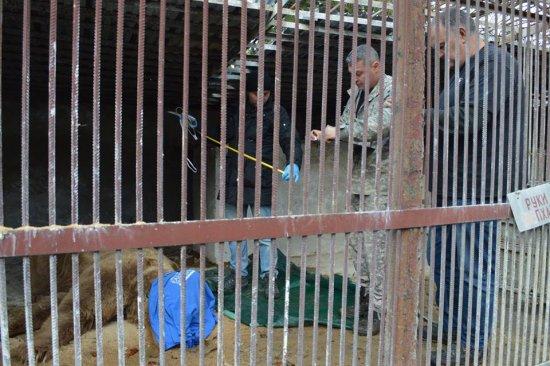 До Синевира привезли ще трьох ведмедів із приватного зоопарку