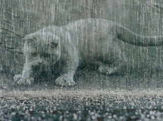 """Результат пошуку зображень за запитом """"дощі"""""""