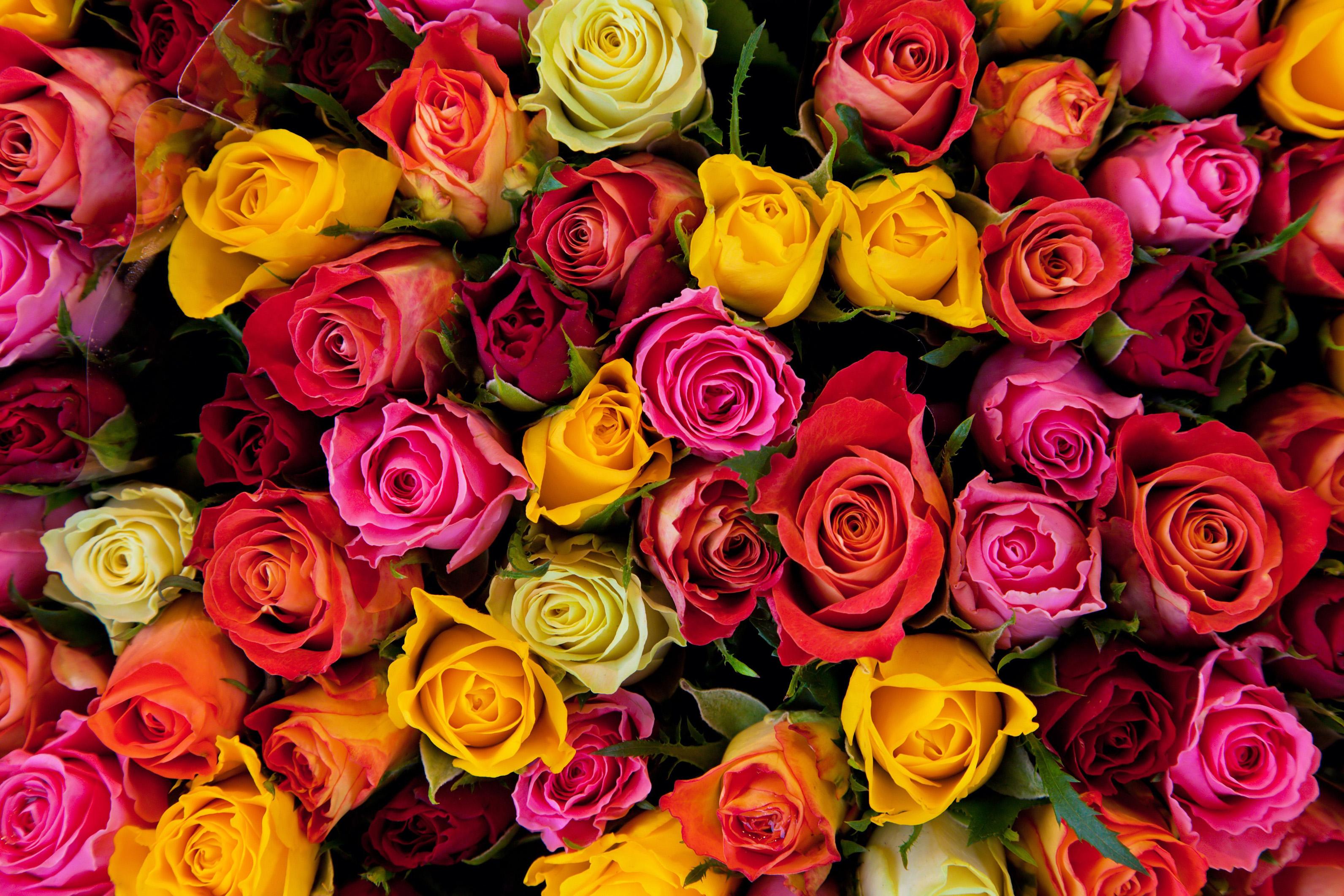 Открытка с днем рождения много цветов 66